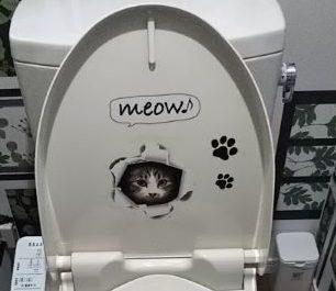 猫カフェのトイレ