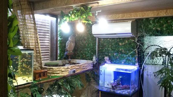 フクロウがいる部屋