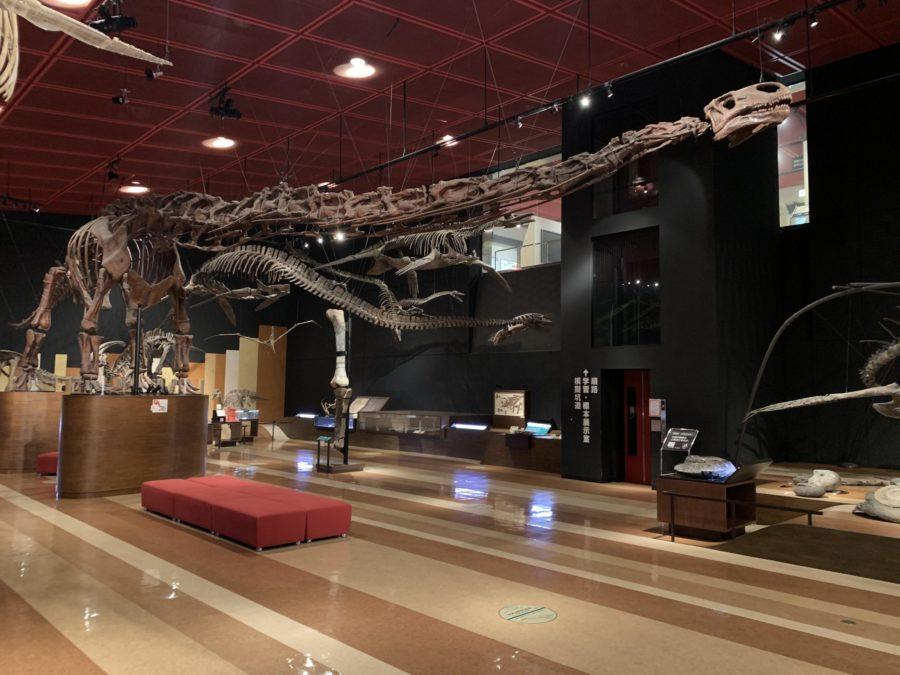 恐竜の化石!模擬坑道!石炭・化石館『ほるる』でダイナミックに歴史を体感!【福島県いわき市】